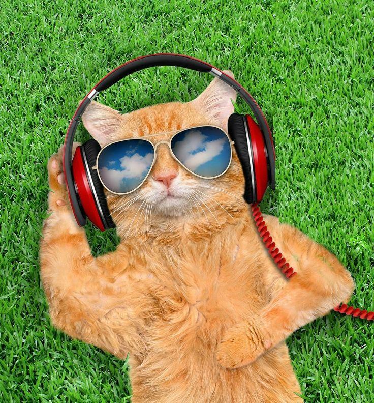 есть делаете прикольные картинки кошек с телефоном сретенском бульваре