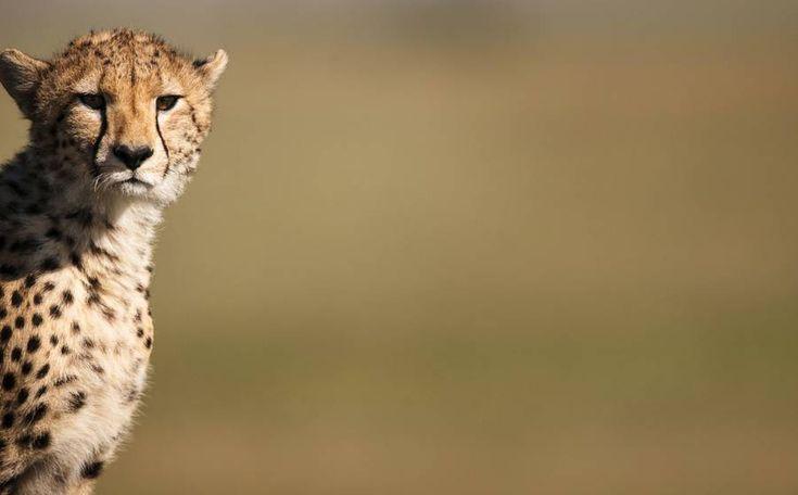 Kenyan Nature Reserve Photography – Fubiz Media