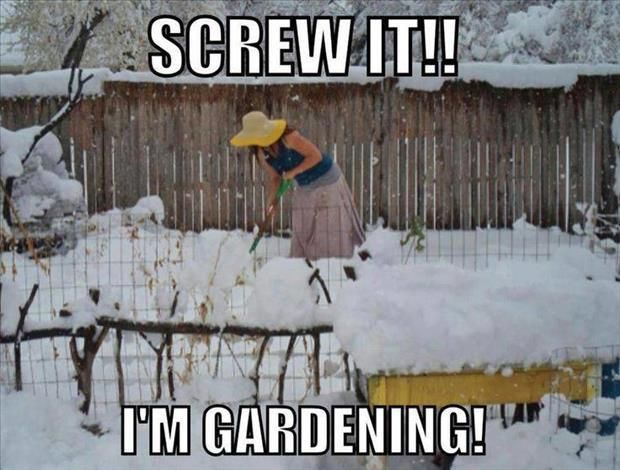 25+ Best Ideas About Cold Weather Funny On Pinterest