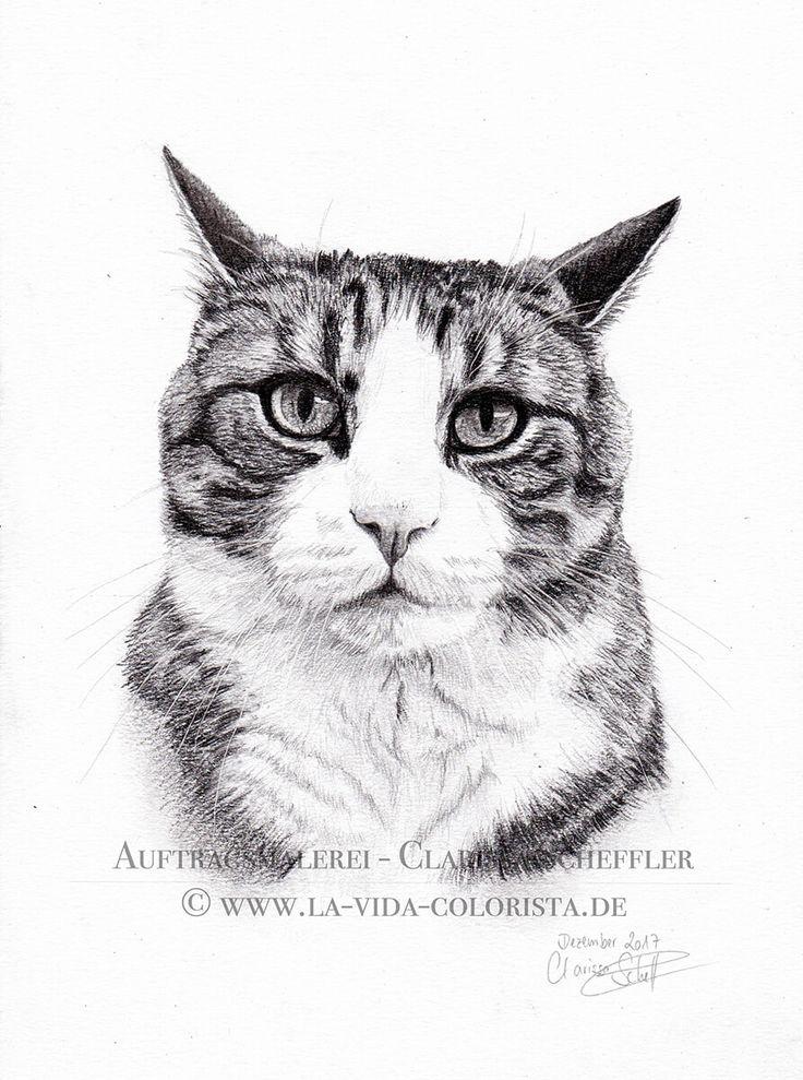 zeichnung – KATZENin Kohle: Timmy & Moritz – Portraitmalerei, Tier- & Hochzeitfotografie – La Vida Colorista