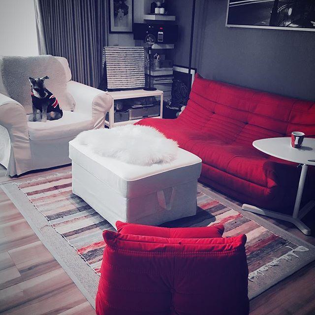 朝からリビング模様替え赤白グレーになりました!  #ikea #livingroom #sofa #ligneroset #togo #模様替え #マンションインテリア #赤いソファ #ソファ #リビング #interior #ファブリックソファ #インテリア #海外インテリア #リーンロゼ  #miniatureschnauzer #ミニチュアシュナウザー #シュナ #シュナウザー #愛犬 #犬好き