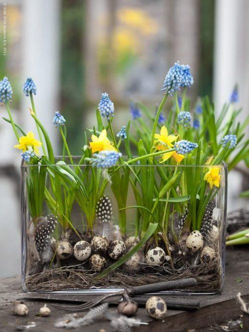 Daffodils and Grape Hyacinths