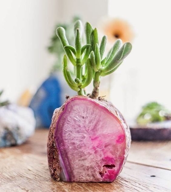 Agate potted plant //