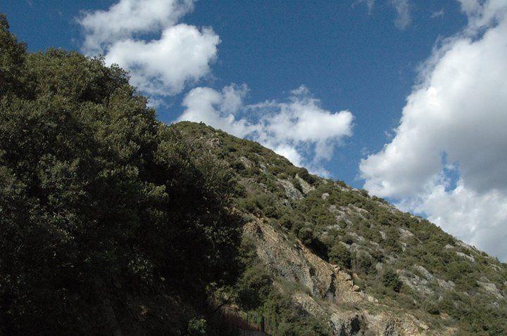 Una collina in Valle Argentina vicino a Badalucco (IM)