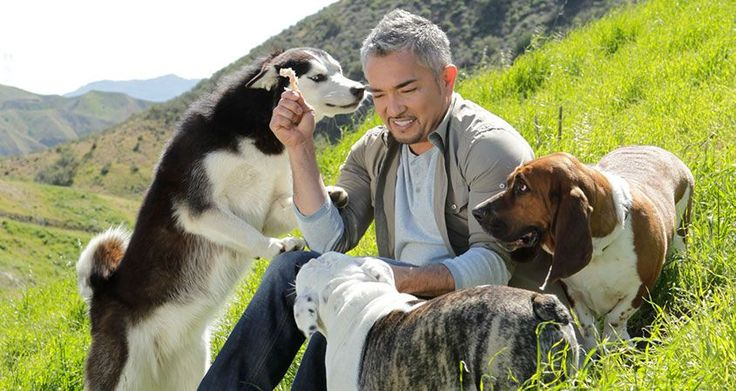 How to help protect your dog against fleas and ticks | Cesar's Way