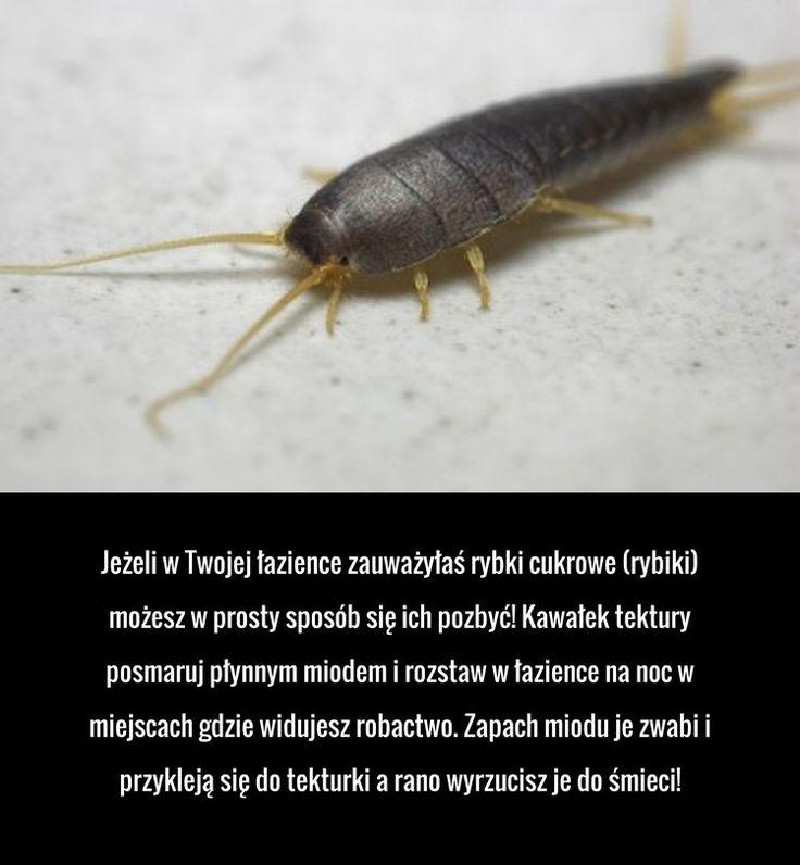 Pozbądź się rybików z łazienki