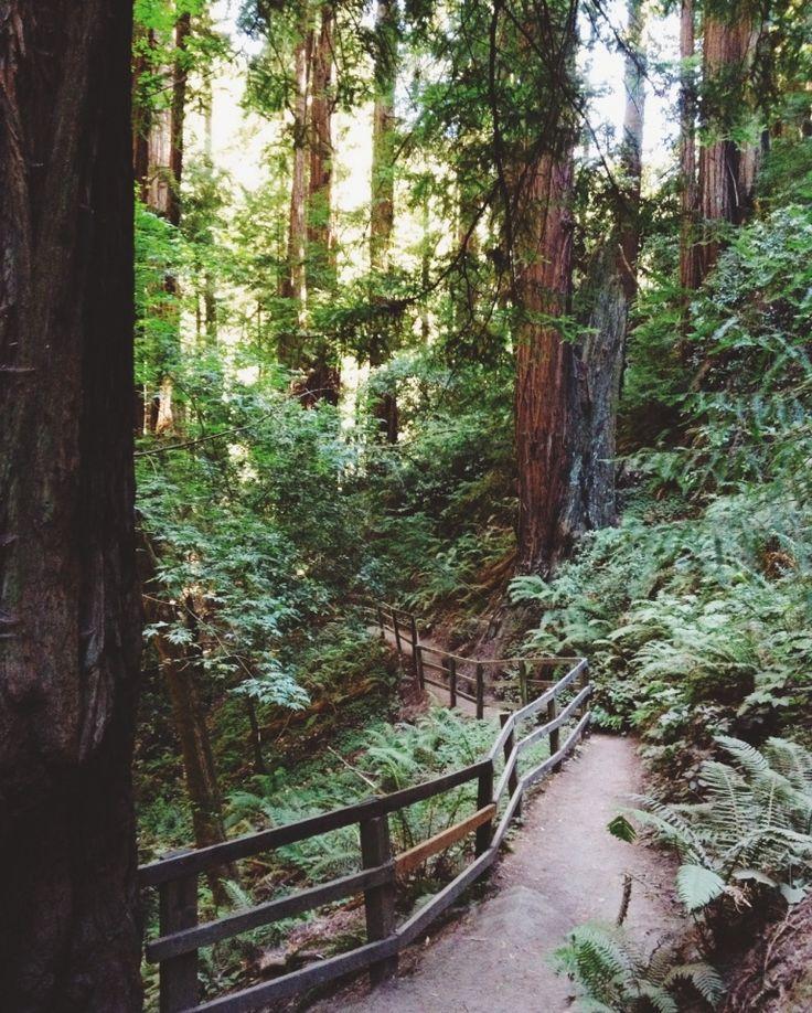 Skyline to Sea Trail, Big Basin Redwoods State Park, California