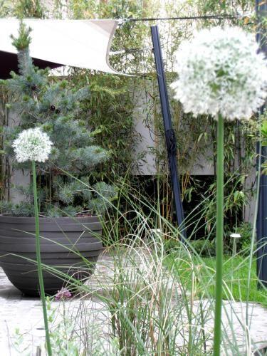 Terrasse contemporaine: Allium Mount Everest, miscanthus gracillimus et pinus parviflora glauca. Conception Canopées.