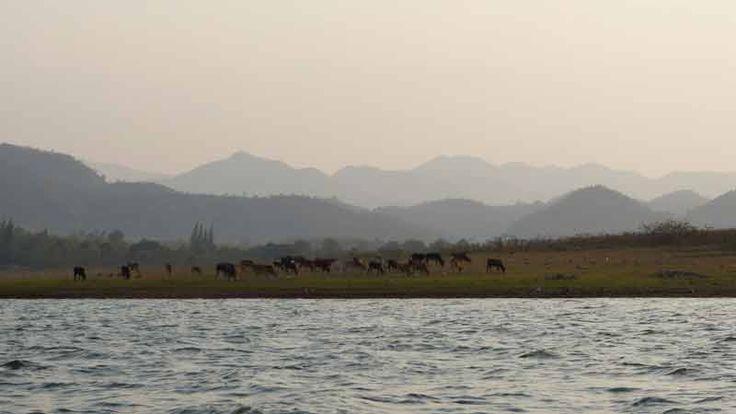 Die Kaeng Krachan Safari führt durch den größten Nationalpark Thailands. Dieser liegt lediglich 2,5 Autostunden in südwestlicher Richtung von Bangkok entfernt in den Provinzen Phetchaburi und Prachuap Khiri Khan und bietet einige Unterkünfte um den Kaeng Krachan Stausee, wo sich das Hauptquartier und das Parkmuseum befinden.