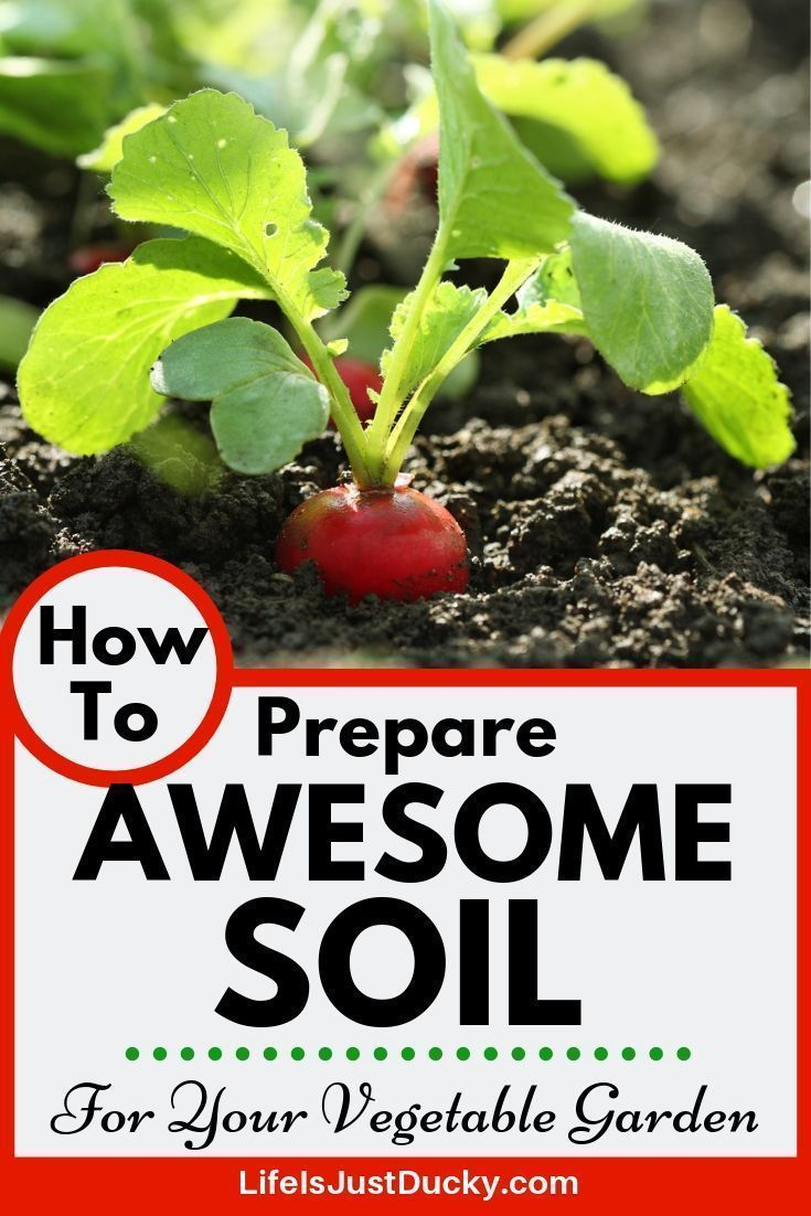 How To Prepare Awesome Soil For Your Vegetable Garden Garden