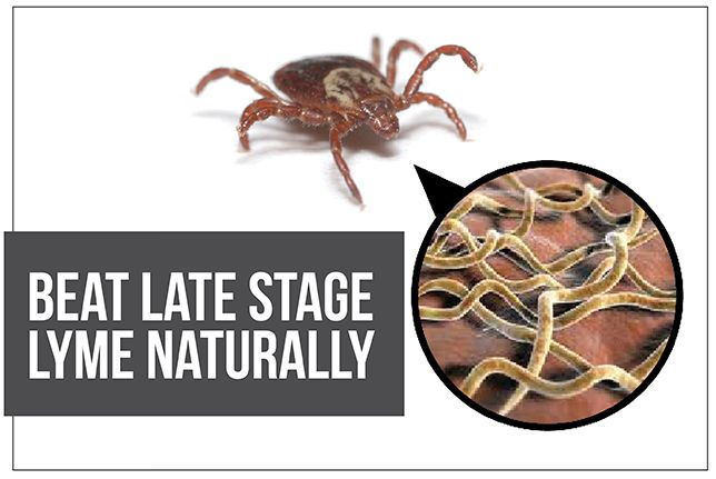 How to Overcome Chronic Lyme Disease with Natural Herbal TherapyLearn how to remove stealth microbes without spending a fortune by Dr. B