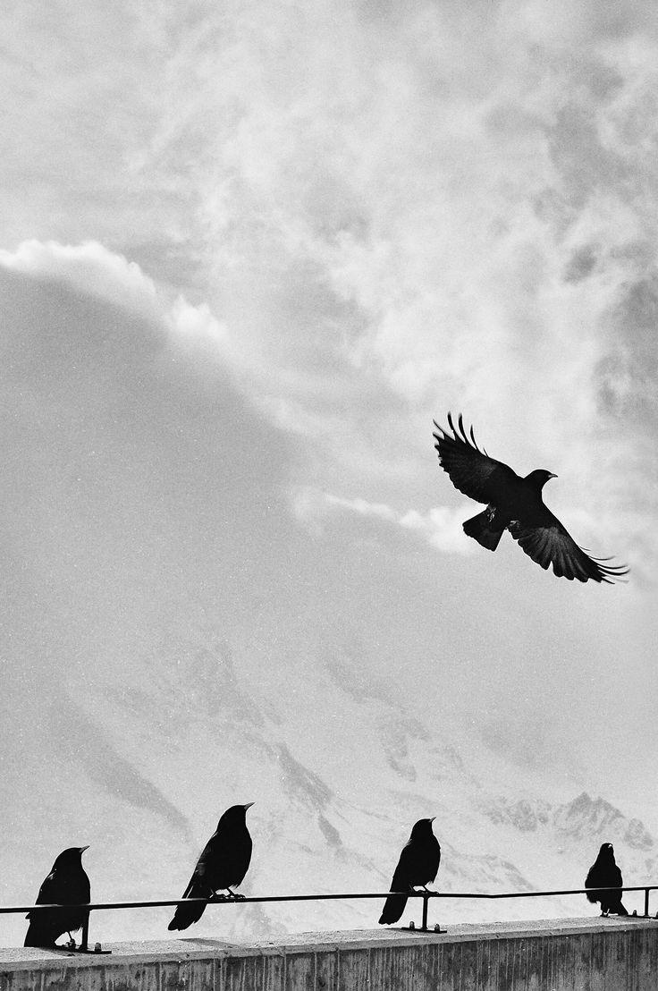 79 best Birds & Butterflies images on Pinterest
