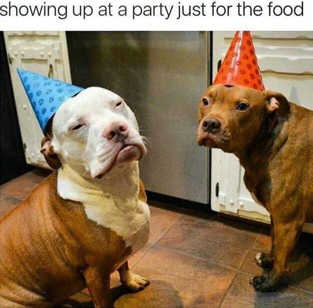 PARTY CRASHERS--Here for Foood!