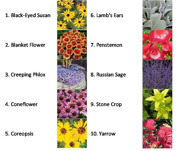 Top 10 drought tolerant plants for your home exteriors for Landscaping plants pictures and names