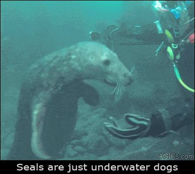 That's what seals really are...