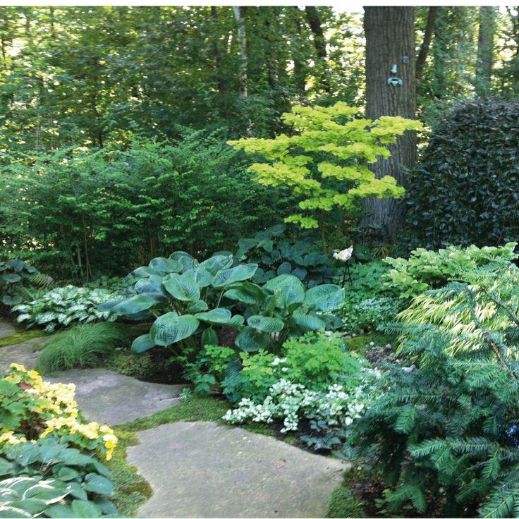 Shady woodland, perennial garden