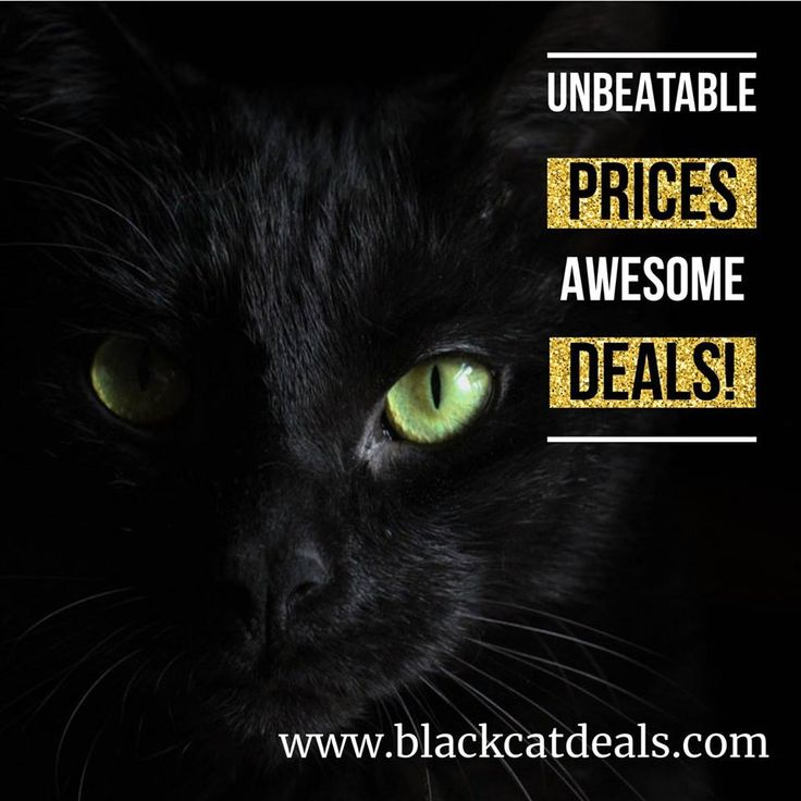 Every week the hottest deals from all over the web. We have got all you need to grow your entrepreneur business. Greetings your Black Cat Deals Team.  https://blackcatdeals.com/  #Marketing #marketingtools #Ecommerce #DigitalMarketing #design #landingpage #SocialMedia #MakeYourOwnLane #GrowthHacking #startup #businessowner #businesswoman #businesscoach #Entrepreneurship #programming #photoshop #entrepreneur #ecommerce #blackcatdeals