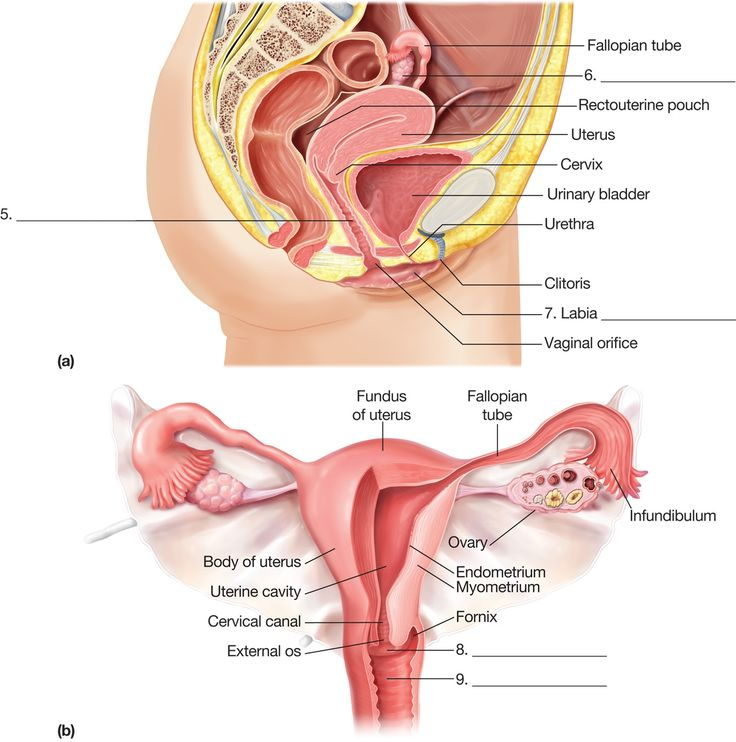 top 25+ best female reproductive system anatomy ideas on pinterest, Human Body