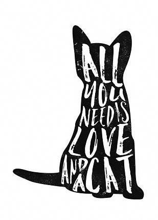 Download All you need is love and a cat. #catideas | Cat ...