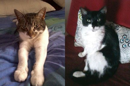 Our two beautiful cats, re-homed from the RSPCA.   Don't just buy a cat from a pet shop - adopt one from a pet rescue shelter instead and give a homeless kitty a new and loving home!