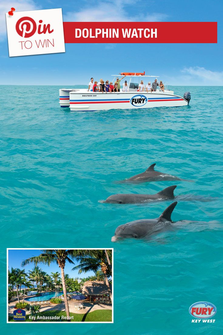 Repin this image and include the tag #FuryFreebie to win a Key West Vacation for 2! Your trip will include this Dolphin Watch trip plus 5 days/4 nights at the Key West Best Western Key Ambassador Resort. Make sure to repin by 09/30/2015 to be entered!