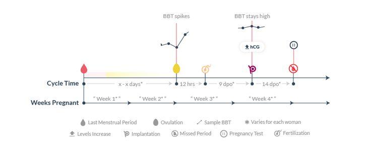 First 4 weeks of pregnancy timeline
