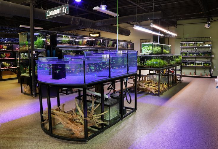 1000 images about dallas store on pinterest for Fish store dallas