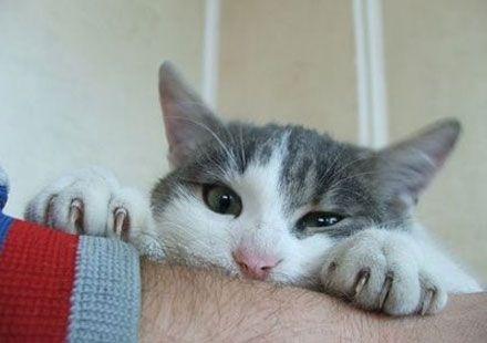 Kedi Tırmığı ile Bulaşan Hastalıklar | Kedi Maması, Köpek Maması, Fiyatları, Köpek, Kedi, Akvaryum, Kuş Haberleri
