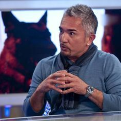 """Cesar Millan fails Germany's """"dog trainer"""" test.  Translate into English."""