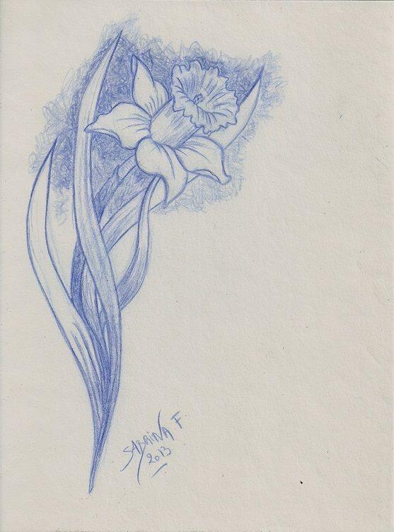 Dessin Jonquille, réalisée à la mine bleue (2013) flower draw - Sabrina F.