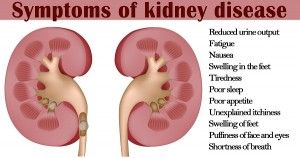 FOW 24 NEWS: The Symptoms Of Kidney Disease----On Fow24news.com...