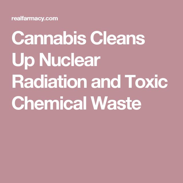 Cannabis Cleans Up Nuclear Radiation and Toxic Chemical Waste
