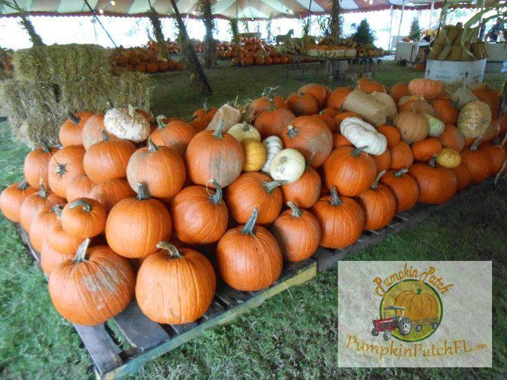 The Pumpkin Patch.   Home