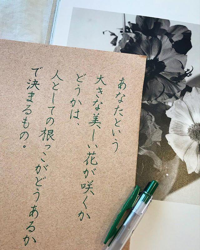 その人の考え方、努力の仕方、人に対する接し方。。。などなどなど。 そんな花の部分ではない、根っこの部分が大事なんだと思います。 #咲いたとしても #根っこが弱いと #すぐ枯れる #写真の中には #隠れトカゲ #書 #書道 #硬筆 #ボールペン #ボールペン字 #手書き #手書き文字 #手書きツイート #手書きツイートしてる人と繋がりたい #美文字 #美文字になりたい #calligraphy #japanesecalligraphy