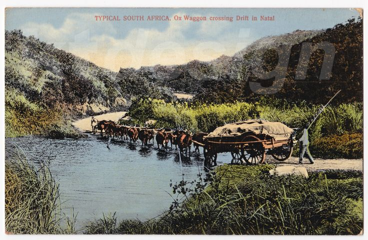 TYPICAL SOUTH AFRICA. Ox Waggon crossing Drift in Natal. Vintage postcard.