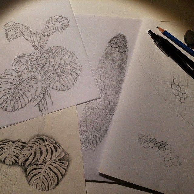 E porque para mim fim de semana não é sinónimo de descanso... #monsteradeliciosa in progress...  #fixaroinstante #desenho #muhnac #draw #drawing #illustration #scientificillustration #graphite #art #costeladeadão