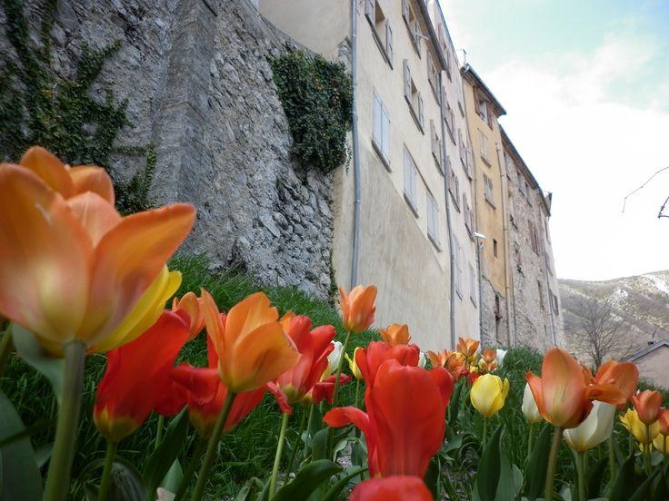 Le boulevard suit les remparts prend les couleurs du printemps. #buech