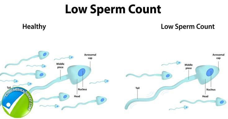 Daily sex and sperm count solved