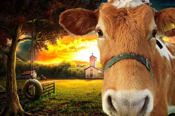 Cow sound effect animation fliiby animal sounds cow