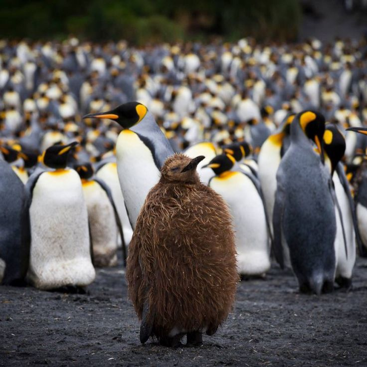 If you are a fan of penguins, albatrosses or remote islands, this is the expedition for you - Birding Sub Antarctic. A bird watchers paradise, discover islands that lie deep in the southern ocean and are mostly inhabited by humans. Amazing 19 day cruise.