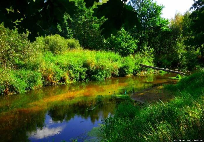 Лесная речка - Претенденты на Лучшее фото недели