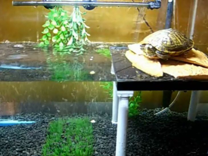 Diy Plastic Turtle Platform Petdiys Com Turtle Stuff