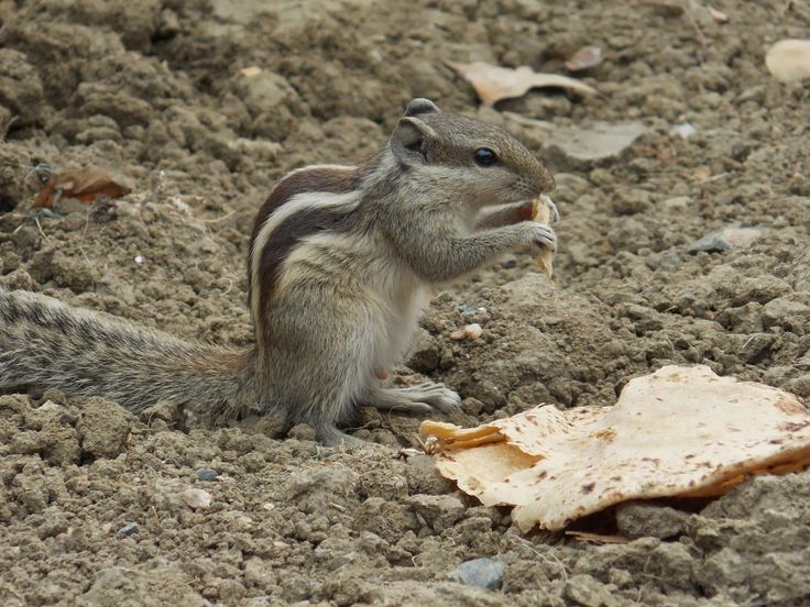 Squirrel Hunger Game In My Home