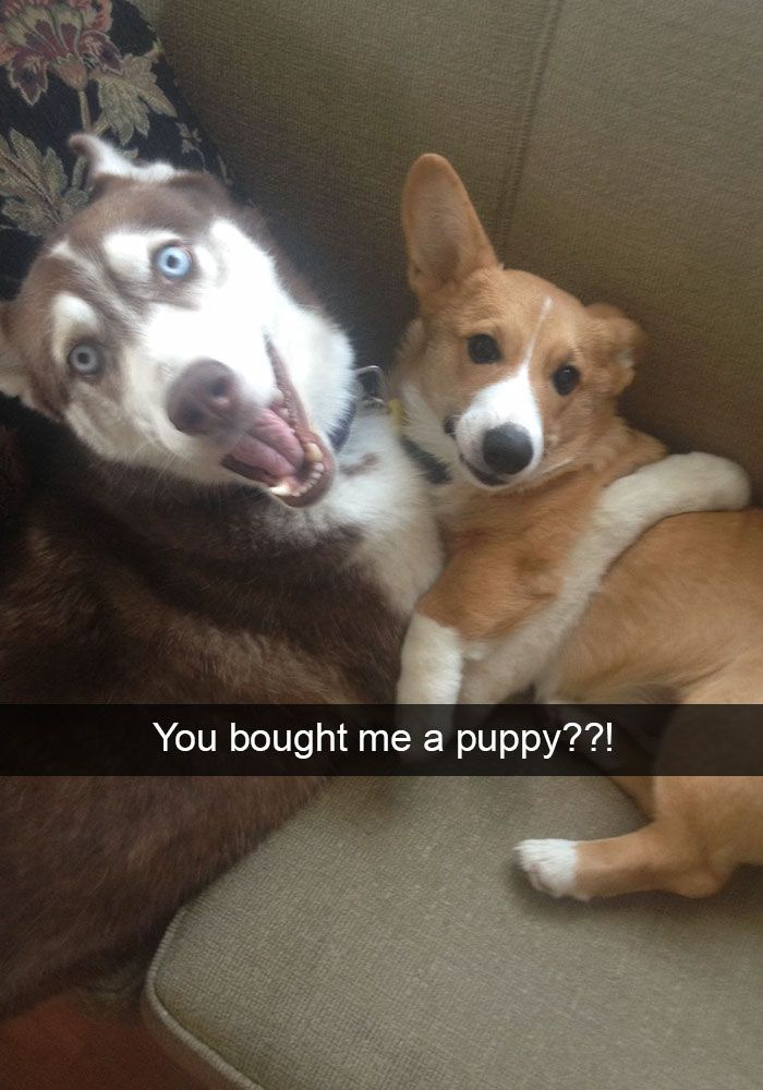 The Internet has all the best dog humor. Just check out these 20+ snapchats about dogs compiled in one place. I dare you not to smile while reading them. I