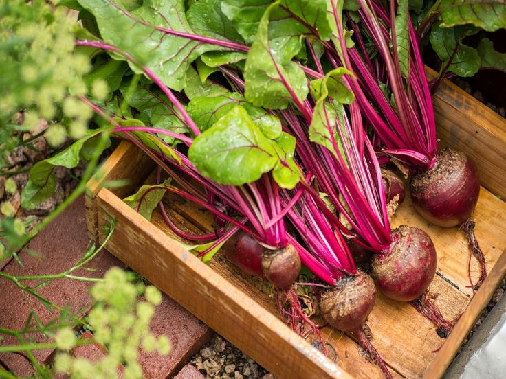 Exploring 8 Health Benefits of Beets