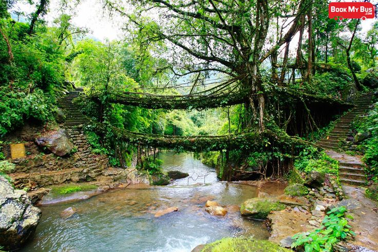 Did you know that there are bridges that are made out of living tree roots? That they are naturally formed? Visit Cherrapunji, the land that records the highest rainfall in the country and tread on the tree root bridges for yourself! Experience the thrill of a life time walking amidst the dense forests, towering trees. Visit http://www.bookmybus.com/ to book your tickets to Cherrapunji and get ready for a surreal adventure!
