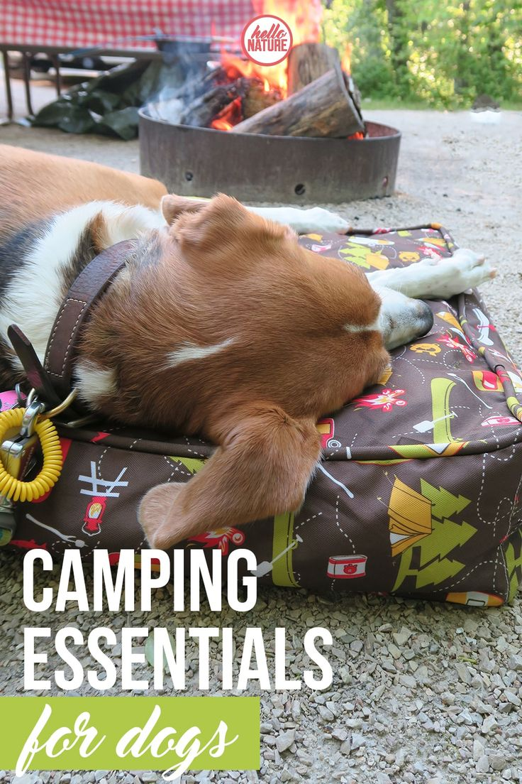 Headed out on your next camping trip with Fido? Make sure you don't forget anything and check out our camping essentials for dogs list! AD