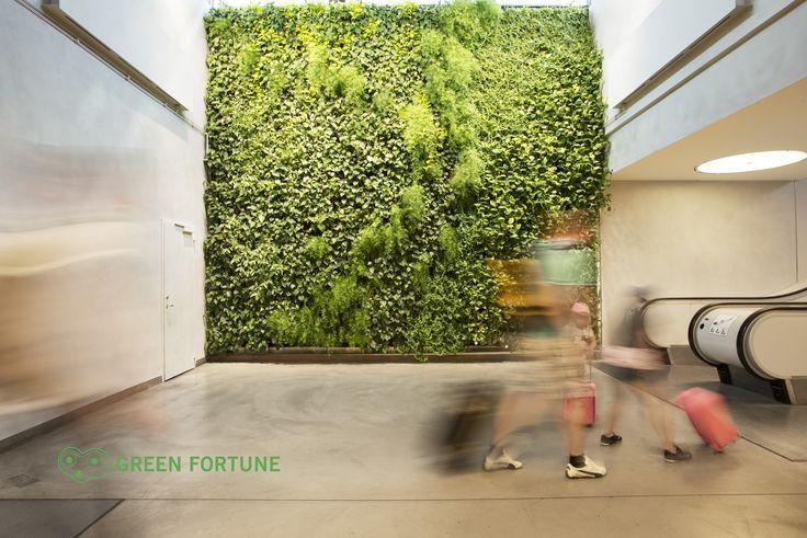 Green-Fortune Plantwall vertical garden, Arlanda, Pflanzenwand, groene wand, plantenwand, växtvägg, kasviseinä, zöldfal, plantevæg