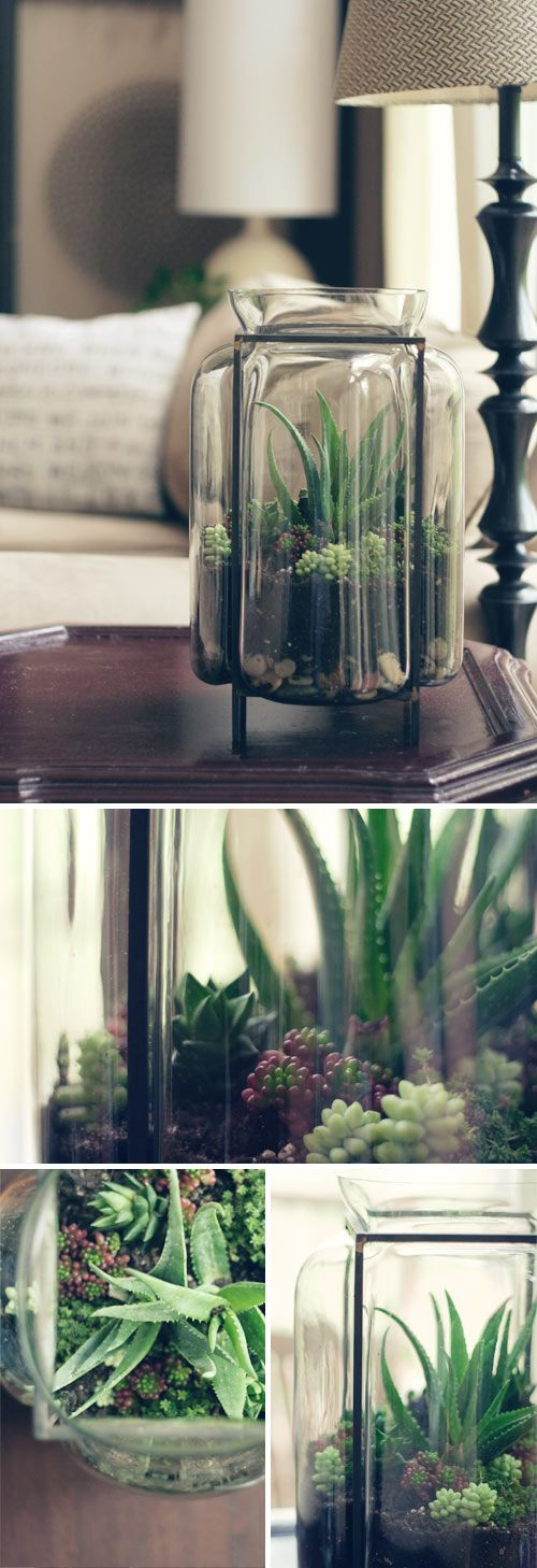 I need another terrarium like I need a hole in my head, but this glass is so beautiful I may have to stop by West Elm when I'm in NYC