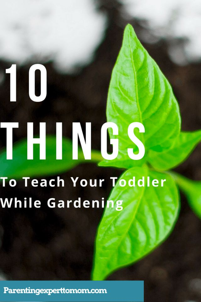 10 things to teach your toddler while gardening- how to encourage development in all areas (cognitive, language, self help, social emotional, and motor ) while you are in the garden!